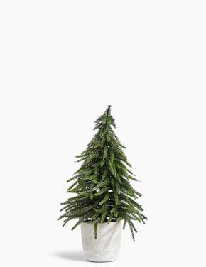 Simli Çam Ağacı