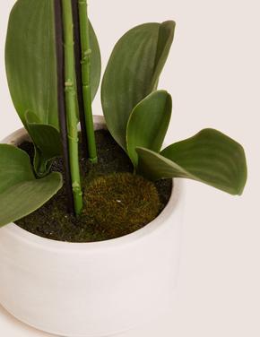 Ev Beyaz Orta Boy Dekoratif Orkide