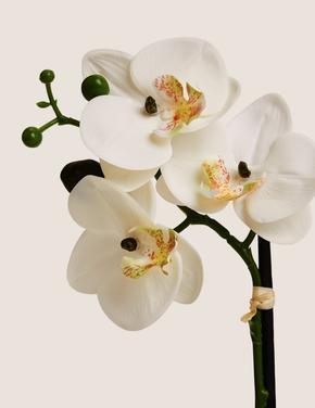 Ev Beyaz Küçük Boy Dekoratif Orkide